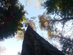 medžiai1