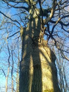medžiai1a