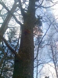 medžiai1ab