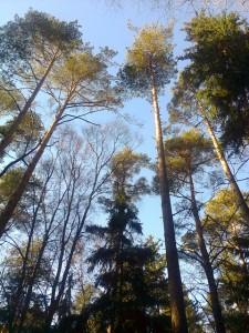 medžiaia