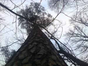 medžiaiab