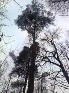 medžiaiabc